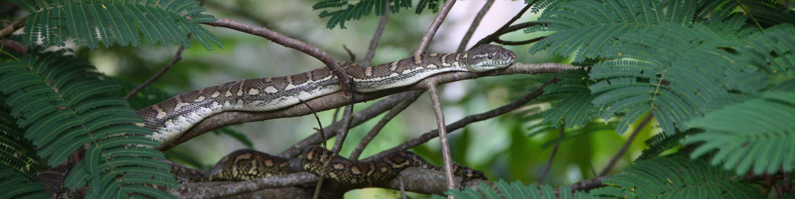 Brisbane Valley snake catcher