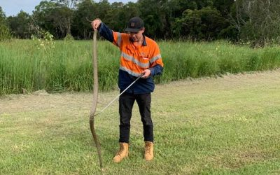 A day in the life of a snake catcher